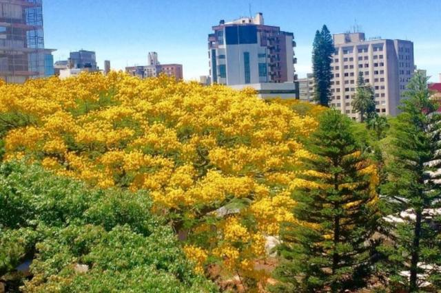 Leitores compartilham fotos de uma Porto Alegre verde e florida @karinplacerda/Instagram