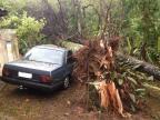 Ciclone de até 118 km/h causa destruição em Santa Catarina /