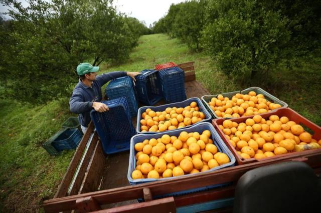Regras gerais para trabalhadores rurais provocam reação no campo Carlos Macedo/Agencia RBS