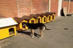 """Justiça garante permanência de """"casinhas amarelas"""" como abrigo para cães de rua em Bagé Reprodução/Facebook"""