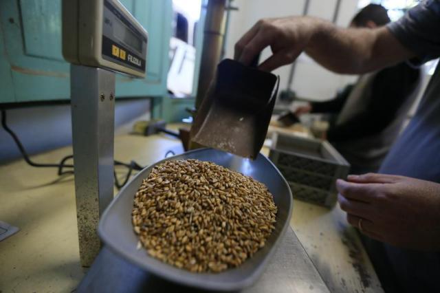 Leilões de trigo negociam mais 200 mil toneladas na Região Sul Lauro Alves/Agencia RBS
