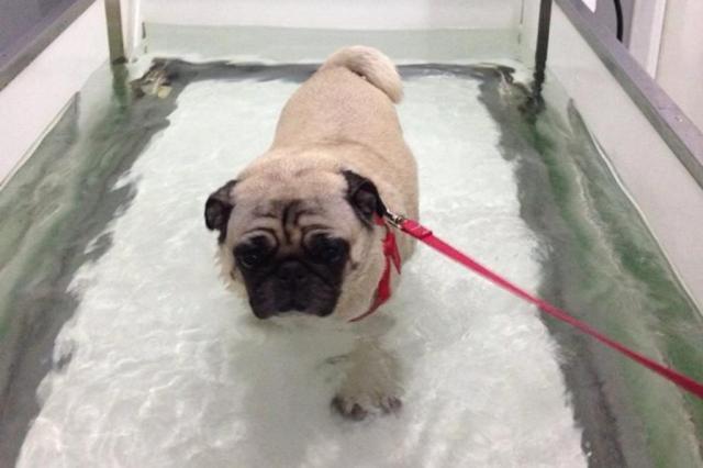 fisioterapia para animais