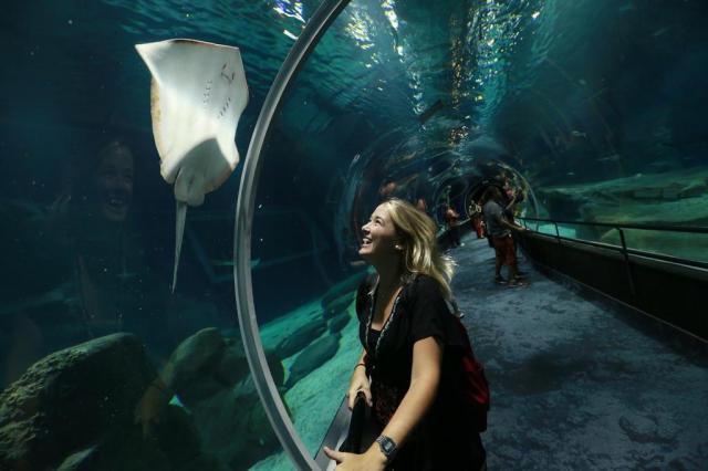 Conheça o aquário que abriga 3 mil animais no Rio de Janeiro Bruno Alencastro/Agencia RBS