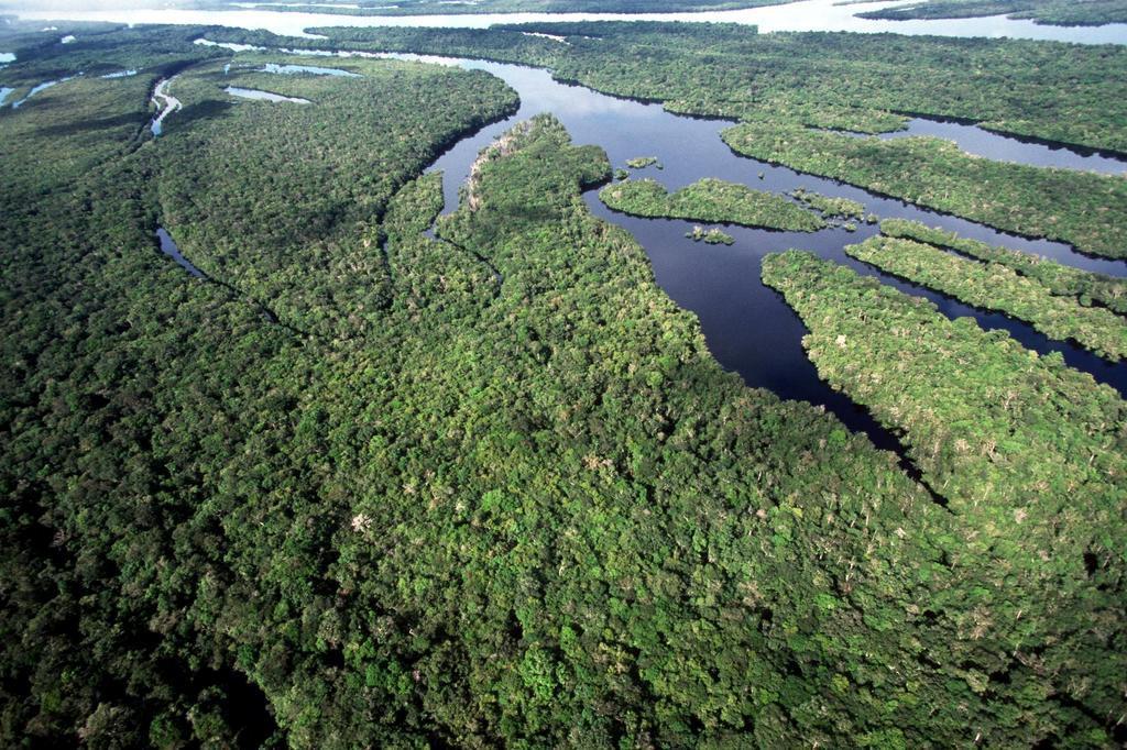 Amazônia teve a maior taxa de desmatamento dos últimos sete anos, conforme Ipam ARQUIVO ICMBIO/Divulgação