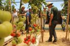Exposição em Chapecó apresenta novidades para os agricultores CooperAlfa/Divulgação