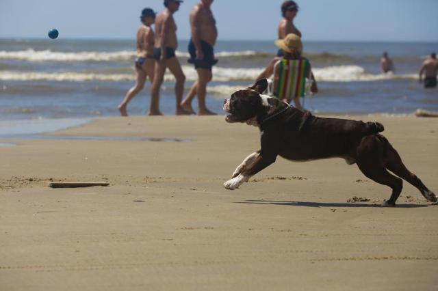 Cães na areia: presença de animais junto a banhistas divide opiniões Marcelo Carôllo/Agencia RBS