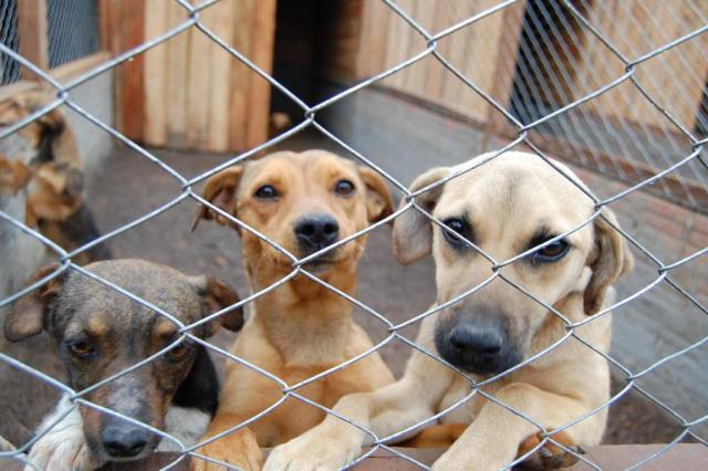 Câmara aprova projeto que proíbe extermínio de cães e gatos por órgãos públicos Tiago Vianna/Agencia RBS