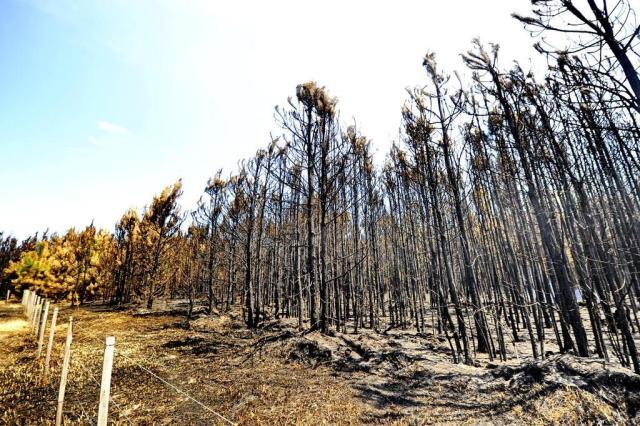 Após quatro dias, bombeiros controlam incêndio próximo à Lagoa da Fortaleza, em Cidreira Lauro Alves/Agencia RBS