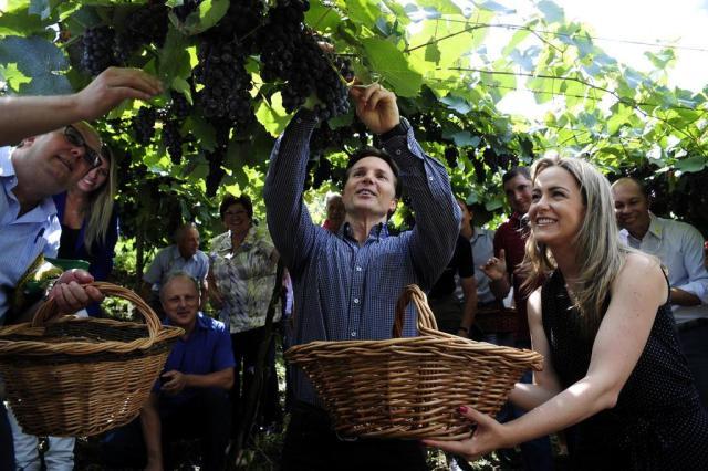 Caxias abre oficialmente a colheita da uva e da maçã Marcelo Casagrande/Agencia RBS
