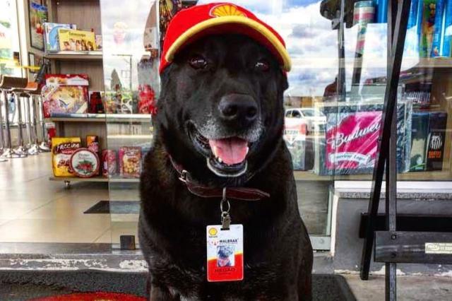 """Cachorro abandonado ganha """"emprego"""" em posto de São Paulo Arquivo Pessoal/"""