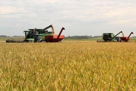 Colheita do arroz começa embalada por expectativa de safra cheia e preços firmes (Claudio Gottfried/Especial)