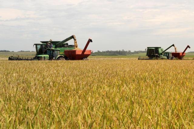 Colheita do arroz começa embalada por expectativa de safra cheia e preços firmes Claudio Gottfried/Especial
