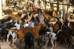 Santuário de cachorros na Lomba do Pinheiro
