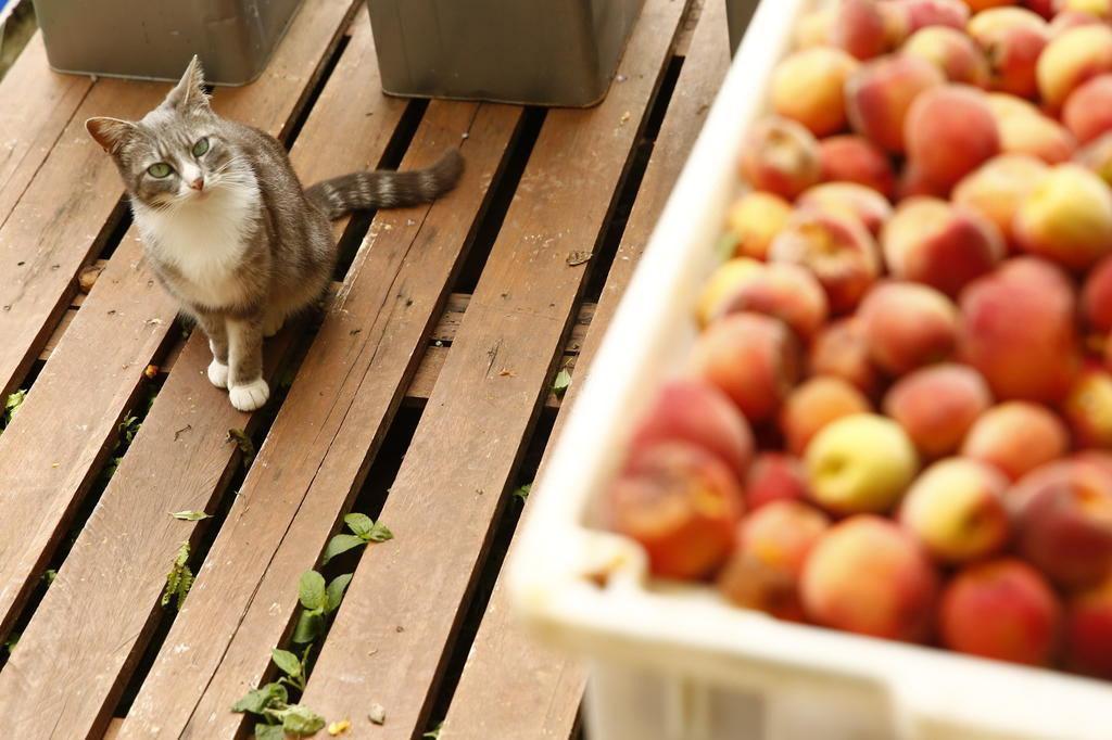 Frutas para pets? Saiba quais eles podem comer e o que é proibido Isadora Neumann/Agência RBS