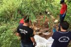 Polícia investiga em Alvorada o sétimo caso de decapitação no ano na Região Metropolitana Divulgação/Polícia Civil