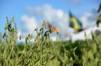 Supersafra, vendas e agricultura familiar: o que foi destaque na Expodireto (Diogo Zanatta/Especial)