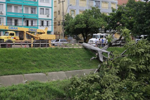 Árvore que estava caída sobre ciclovia na Avenida Ipiranga foi retirada Anderson Fetter/Agencia RBS