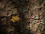Outono começa na manhã do dia 20 de março e termina no dia 21 de junho