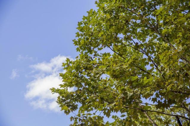 Estado terá predomínio de sol e tempo firme nesta terça-feira Anderson Fetter/Agencia RBS