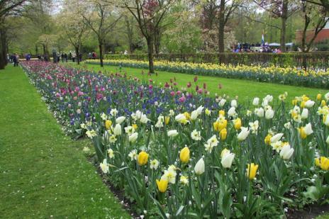 Na Holanda, uma visita obrigatória para ver as tulipas deKeukenhof (Rosane Tremea/)