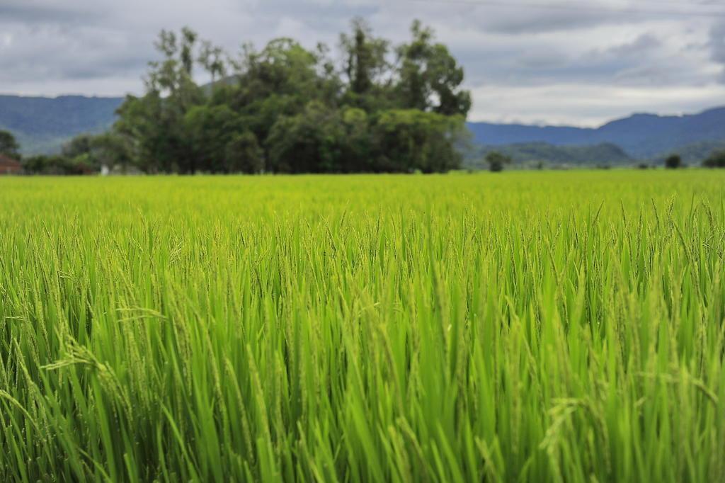 Oportunidade de agronegócio aberta com o México