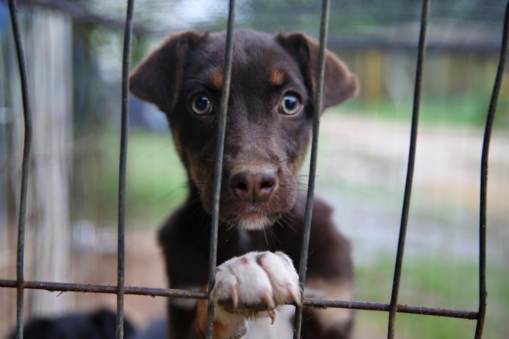 Explicação para o cachorro ser o melhor amigo do homem pode estar nos genes Bruno Alencastro/Agencia RBS