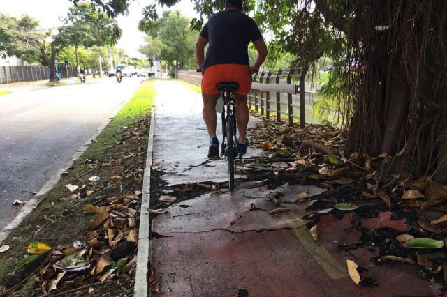 Raízes de árvore danificam ciclovia da Avenida Ipiranga, na Capital Marina Pagno/Rádio Gaúcha