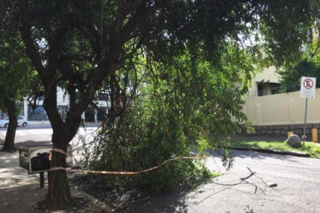 Galho de árvore bloqueia trânsito em rua do bairro Petrópolis, na Capital Marina Pagno/Rádio Gaúcha