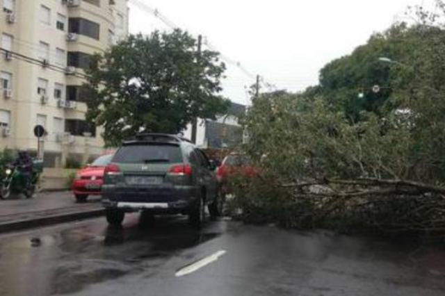 Árvore caída dificulta trânsito na Avenida Oscar Pereira Pelas Ruas/Foto de leitor