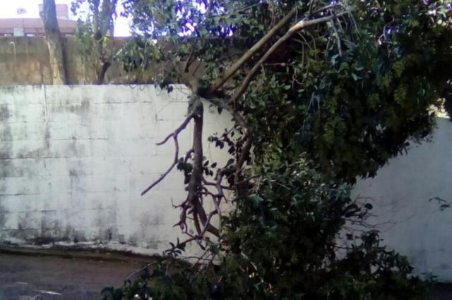 Árvore cai sobre muro e bloqueia entrada de condomínio na Capital Hedi Schmitt/Arquivo pessoal