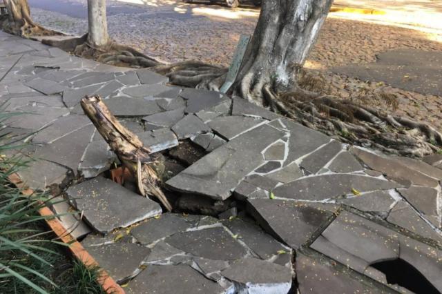 Rua do bairro Cristal tem árvore com risco de queda, calçada danificada e esgoto a céu aberto Marina Pagno/Rádio Gaúcha