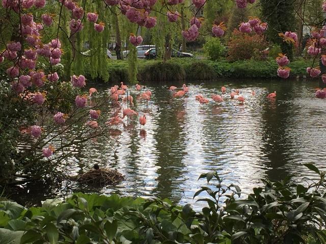 Um passeio no zoo de Amsterdã Rosane Tremea / Arquivo pessoal/Arquivo pessoal