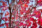 A cara do outono em Morro Reuter Thiago Neuberger / Arquivo Pessoal/Arquivo Pessoal