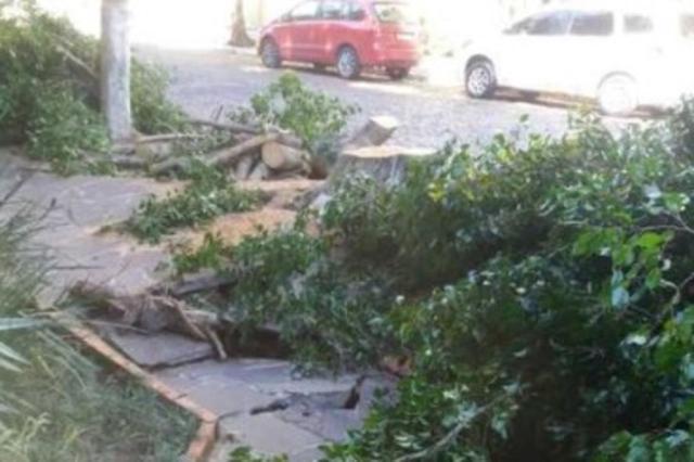 Galhos de árvore cortada há quatro dias na zona sul de Porto Alegre ainda não foram recolhidos Pelas Ruas/Reprodução