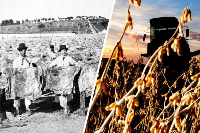 Do charque à soja: federação de produtores mais antiga do Brasil chega aos 90 anos /