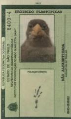 A história do resgate de um pássaro brasileiro esquecido há 200 anos nos Estados Unidos Arquivo Pessoal/Divulgação