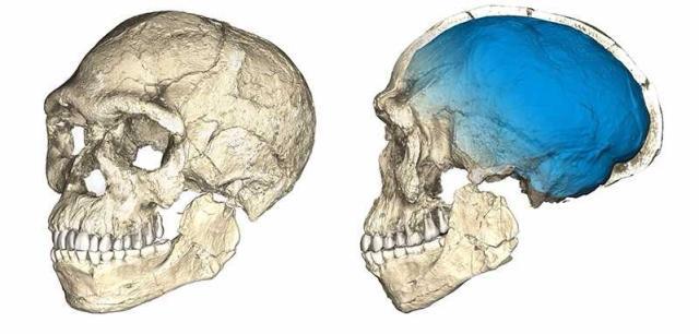 Fósseis no Marrocos sugerem que Homo sapiens é 100 mil anos mais velho do que se acreditava Philipp Gunz, MPI EVA Leipzig / Divulgação/Divulgação