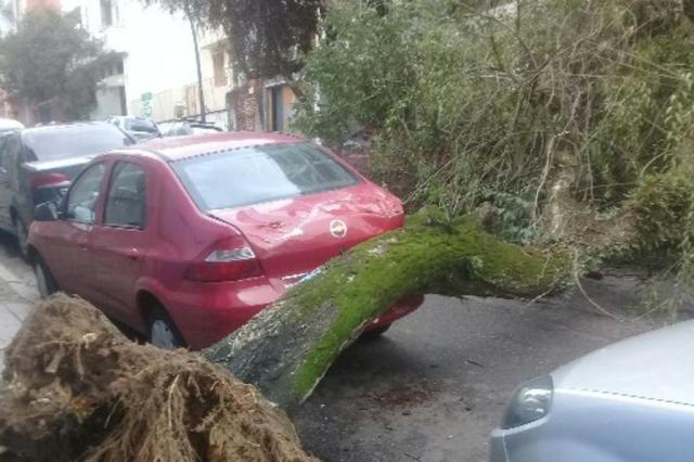 Após queda de árvore, trânsito na rua Duque de Caxias é liberado Tayná da Luz/Arquivo Pessoal