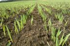 Expectativa é de que cultivo de cevada aumente no Rio Grande do Sul Ambev/Divulgação