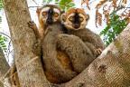 Os lêmures e a biodiversidade em Madagascar (Haroldo Castro / Arquivo pessoal/Arquivo pessoal)