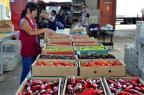 OCDE avalia Brasil para que país integre grupo de frutas da organização Rovena Rosa/Agência Brasil