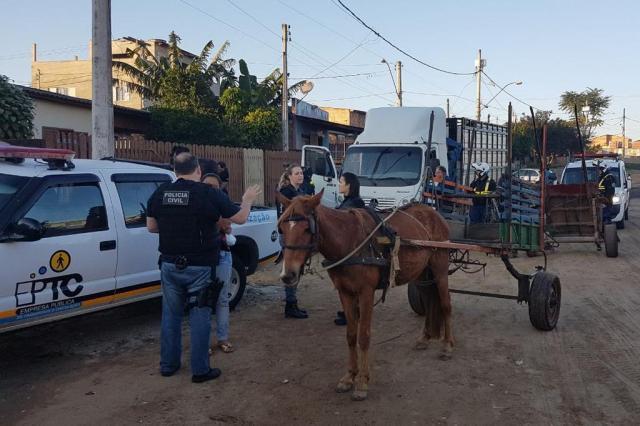 Polícia Civil e EPTC fazem operação em Porto Alegre para combater maus-tratos a cavalos PMPA/Divulgação