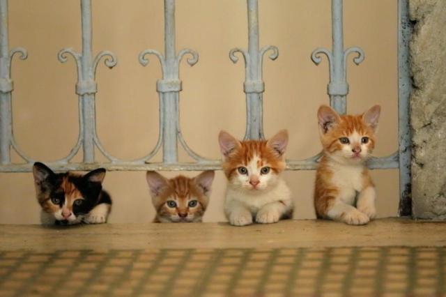 """Em cartaz nos cinemas, filme """"Gatos"""" mostra vida dos pequenos felinos em Istambul ESPAÇO FILMES/Divulgação"""