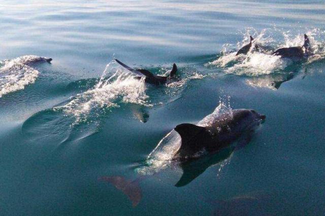 VÍDEO: dezenas de golfinhos são avistados na Barra da Lagoa, em Florianópolis Luiz Marcos/Arquivo pessoal