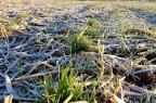 Oscilação de temperatura causa prejuízos nas lavouras do RS Lorenzo Mattioni Viecili/Biotrigo,Divulgação