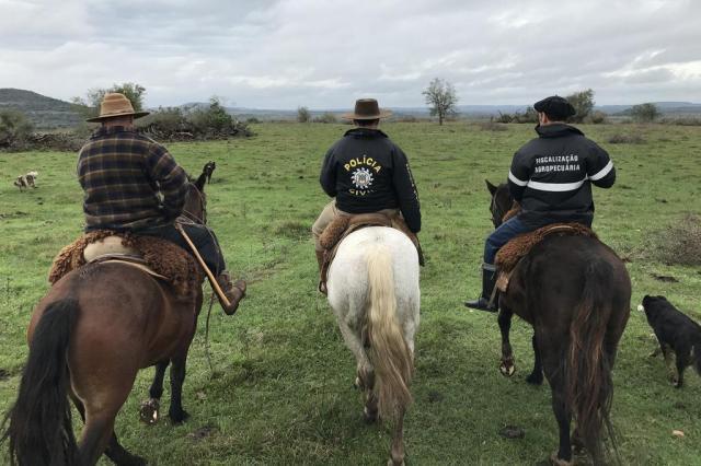 Levantamento mostra pouca investigação em furto de gado no RS Giovani Grizotti/Agencia RBS