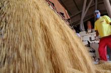 Negócios com soja retomam força no Rio Grande do Sul Fernando Gomes/Agencia RBS