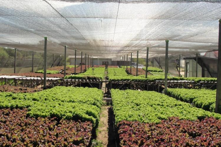 Produtores rurais se engajam na campanha nacional Setembro Verde Arquivo pessoal/Divulgação
