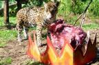 """FOTOS: animais ganham """"churrasco"""" para comemorar o 20 de Setembro em zoológico de Gramado Halder Ramos/Divulgação/Gramadozoo"""