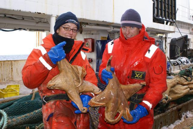 Pesquisadores descobrem estrela-do-mar gigante no Antártico John Mitchell, AP  /
